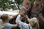 Foto: VidiPhoto<br /> <br /> BEMMEL &ndash; Ondanks de jaarlijkse terugloop van dieren op de pony- en paardenmarkten, blijft er voor deze vorm van handel toekomst. Dat zegt voorzitter Cor Grasmeijer van de Bemmelse ponymarkt, de grootste van Nederland. Maandag werden er op de ponymarkt rond pony&rsquo;s en paarden aangevoerd, weer minder dan het jaar daarvoor. Volgens Grasmeijer er is er weer meer belangstelling van handelaren en particulieren door de aantrekkende economie. Ondanks dat dierenmarkten onder vuur liggen van dierbeschermingsorganisaties, verwacht Grasmeijer niet dat er op termijn een eind komt aan de paardenmarkten in Nederland. &ldquo;Er zijn nog veel paardenliefhebbers in binnen- en buitenland en handelaren willen bovendien toch eerst de dieren zien en voelen voordat hij ze koopt. Bovendien is er meer aandacht voor dierenwelzijn dan vroeger. Zo zijn we later begonnen, zodat de paarden- en pony&rsquo;s minder lang hoeven te staan, en worden de dieren vooraf gekeurd door een veearts.&rdquo; Bemmel is van oudsher de grootste ponymarkt van ons land, hoewel er inmiddels ook veel paarden worden aangevoerd. Van de paardenmarkten in ons land is Bemmel na Zuid-Laren, Hedel en Elst de vierde in grootte.