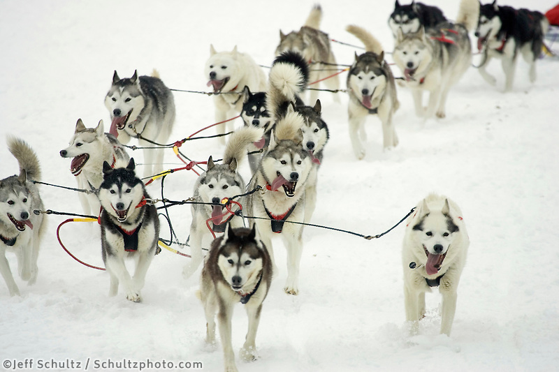 Karen Ramstead Dog Team on Trail @ Restart Iditarod 2005 AK Winter Willow Lake SC