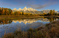 Shwabacher Autumn