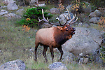 John provides insight into both wildlife photography and behavior. He has a B.S. in zoology from nearby Colorado State University and a M.S. from Washington State University.<br />