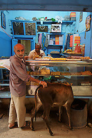 Man and a holy cow take  snack at a food place in Varanasi, India