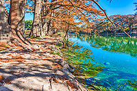 Reflection On The Frio -  Garner State Park has the most beaufiful clear emerald green waters and on this day with no wind you can see the reflections of the cypress in the tranquil water of the Frio River and the cypress roots as they reach out into the waters for a drink.  The cypress trees were starting to drop their fall leaves but lucky for us they had not done it yet so we got these lovely fall landscape colors.