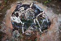 Itaguara_MG, Brasil...Ossada de um cachorro em uma rodovia...A dog carcass in the highway...Foto: LEO DRUMOND / NITRO
