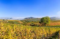 France, Cher (18), région du Berry, Sancerre, la ville sur son piton, le vignoble en automne et brumes matinales // France, Cher, Sancerre, the little town  on the hill and the vineyard in autumn, morning fog