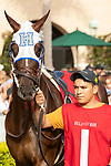 DEL MAR, CA  AUGUST 31: #1 Vasilika, ridden by Flavien Prat, in the paddock of the John C. Mabee Stakes (Grade ll) on August 31, 2019 at Del Mar Thoroughbred Club in Del Mar, CA. ( Photo by Casey Phillips/Eclipse Sportswire/CSM)