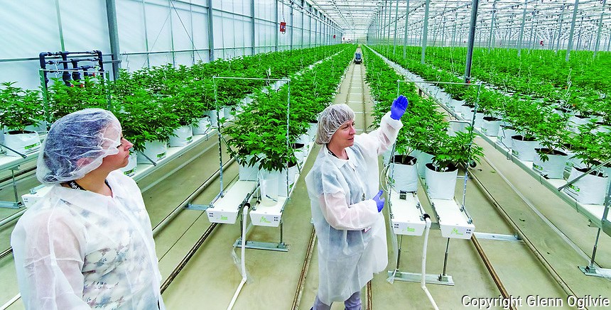 Francoise Levesque, High Park Farms master horticulturalist, guides the media through a tour of the 13 acre cannabis operation on LaSalle Line, Enniskillen. When fully operational, expected this fall, the greenhouse will require 200 employees to groom over 50 strains of  marijuana which originated in British Columbia.<br /> <br /> On left is production manager Donna Houssin