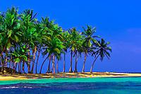 Palm trees on Pelican Island (a.k.a. Icotupo Island), San Blas Islands (Kuna Yala), Caribbean Sea, Panama