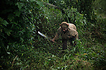 A woman working in the jungle, Cameroon.