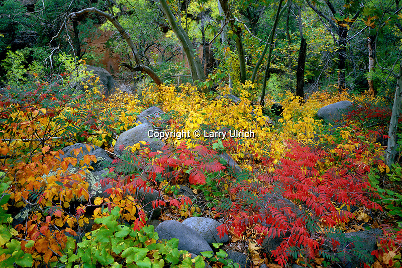 Streamside garden<br />