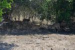 Yala National Park Sri Lanka<br /> Spotted Deer