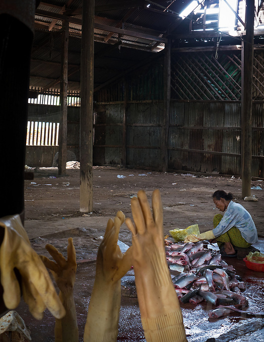 This women is cleaning fish in this old and deserted Building in the Battambang Province some distance from town. Cambodia