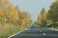 Roadside trees are seen in Western Hungary (about 200 kilometres west of capital city Budapest), Hungary on Oct. 19, 2017. ATTILA VOLGYI