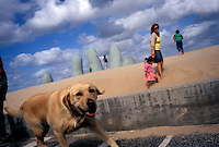 PUNTA DEL ESTE, URUGUAY  - MARCH 2005:  A dog runs along the side of the beach in Punta del Este, Uruguay.  (photo by Landon Nordeman)