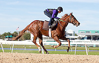 FEBRUARY 20, 2012 - TAMPA, FLA.: Jockette Carol Cedeño has returned to horse racing at Tampa Bay Downs in Tampa, Florida, just four months after giving birth to her son, Dylan. Photo by Matt May