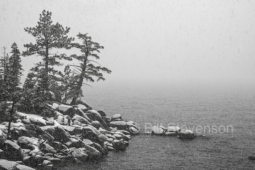 An image of two pine trees at Lake Tahoe in a snow storm. Closed in by the fog and deserted because of the weather, this normally busy spot, felt like the solitude of wilderness.