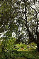 Il Giardino di Ninfa..The Garden of Nymph.