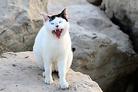 Stock image of cute white yawning cat standing on rocks.<br />