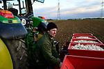 GERMANY, Lampertheim, garlic farming, sowing with John Deere tractor and sowing machine / DEUTSCHLAND, Lampertheim bei Worms, Pantiru Knoblauchkulturen GbR und Saatguthandel, Aussaat von Knoblauchzehen der Sorte Gardacho mit John Deere Traktor und Broch Steckmaschine, Verwendung von virenfreiem Saatgut der Firma Planasa in Spanien