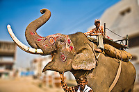 Mahout and his decorated elephant in Agra.<br /> (Photo by Matt Considine - Images of Asia Collection)