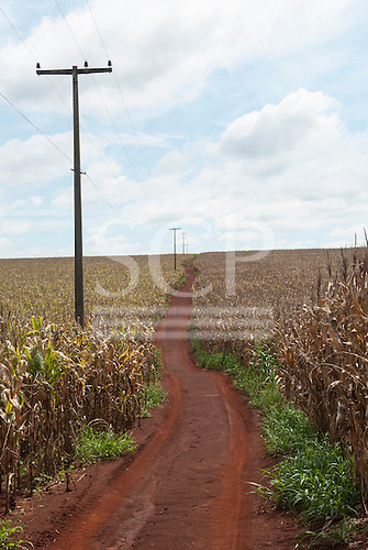 Fazenda Cagibi, Brazil. red earth dirt track through maize growing in fields with electricity poles and wires.