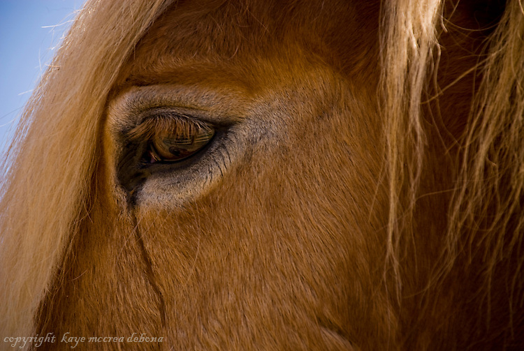 Horse close-ups and landscapes