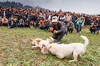 Asia,China,Guizhou,Chong'an,festival of Lusheng of Gejia,dog fight ,China minority