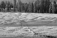 Long fence line in pasture. Zumwalt Prairie, Oregon