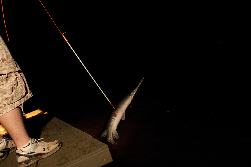 A gar is shot by Mike Brookover during a bowfishing trip on Aquia Creek in Virginia on June 20, 2013. CREDIT: Lance Rosenfield