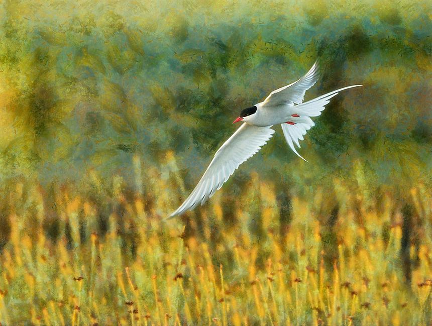 Best in Creative: Flight of the Arctic Tern