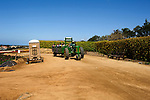 Tour tractor at the flower fields in Carlsbad