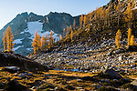 The trail to both Lewis Lake and Wing Lake in the North Cascades of Washington State runs along Maple Pass seen here with the Western Larch trees as they turn yellow with Autumn.