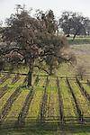 Shenandoah Valley vineyards, winter...Young's VIneyard