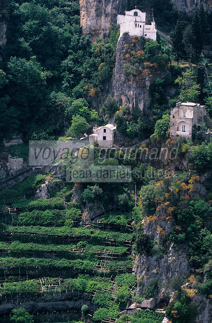 Europe/Italie/Côte Amalfitaine/Campagnie/Ravello : Depuis le belvédère du jardin de la villa Cimbrone (érigée au début du XIX° par Lord William Bechett) - Plantations de citronniers