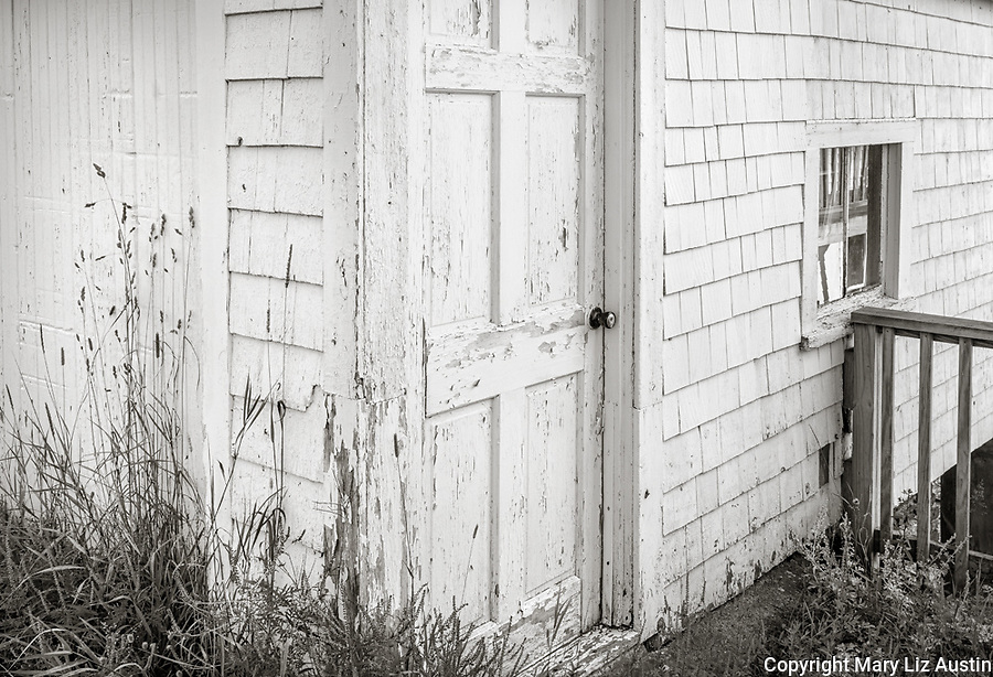 Stonington, Maine: Shed door with grasses