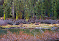 Autumn Hues, Truckee River