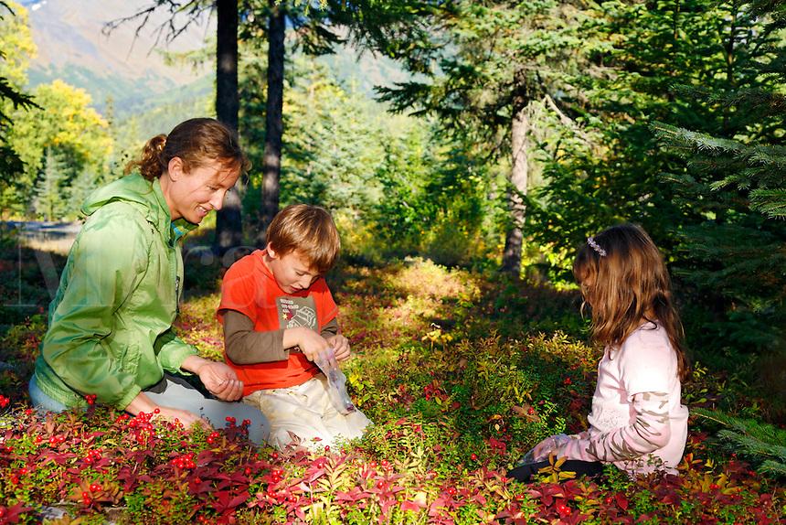Berry Picking at Trail Lake Campground, Kenai Peninsula, Chugach National Forest, Alaska.