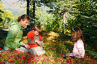 Berry Picking at Trail Lake Campground, Kenai Peninsula, Chugach National Forest, Alaska.
