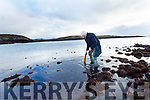 John Fitzgerald of Atlantic Irish Seaweed collects seaweed on the shoreline around Castlecove and Derrynane pictured here harvesting some Kelp.