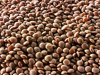 Whole Brown Lentils Beans - stock photos