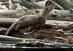River Otter & Rabbit