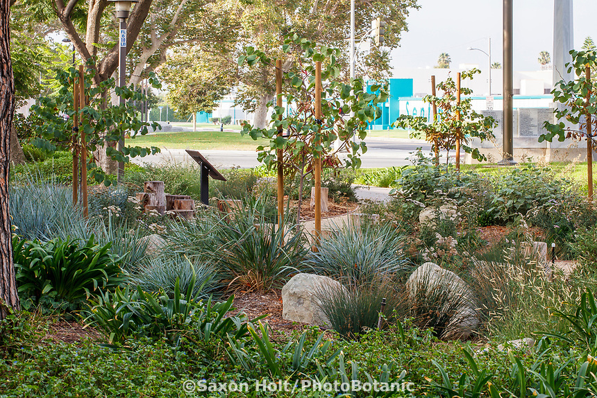 Inglewood City Hall - Water conserving Southern California municipal demonstration garden; design Urban Water Group