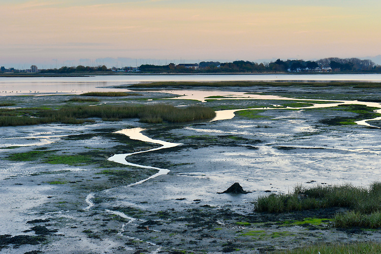 Mudflats at Langstone Harbour, Hampshire, Uk