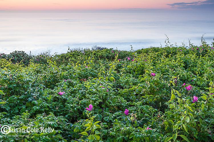 Dawn at Nauset Light Beach, Cape Cod National Seashore, Eastham, Massachusetts, USA
