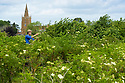 04/05/17<br /> <br /> Elderflower Manager, Andrea Beddows checks this year's harvest in a field overlooking St. Denys Church in Eaton.<br /> <br /> Belvoir Fruit Farms – a Truly Blossoming Business<br /> <br /> Belvoir Fruit Farms has appointed the UK's first Elderflower Manager to help source more elderflowers and to grow it better in their own 90 acres of plantations, near Grantham, Lincolnshire.  The £25.2m turnover, family owned soft drinks producer, has been making its award winning Elderflower Cordial for 35 years and in 2018 saw sales of it grow by over 20%.  Yesterday saw the first large infusion of its Organic Elderflower Cordial for 2019 made using elderflowers from blossoms grown in its own plantations and picked by the local community.<br />  <br /> Belvoir currently fills 25-30 million bottles a year across its full range, catering for a robust domestic market and an export market encompassing 36 countries.  Growth in demand for Belvoir drinks has necessitated the business recently investing £1.3million in a new rinser, filler and capper machine as well as a new palletiser and automatic wrapper which has increased efficiencies, has dramatically reduced the company's waste and has the potential to double the factory's production capacity.<br />  <br /> All Rights Reserved, F Stop Press Ltd +44 (0)7765 242650 www.fstoppress.com rod@fstoppress.com