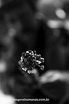 Popula&ccedil;&otilde;es Tradicionais de apanhadores de flores Sempre Vivas situadas na Serra do Espinha&ccedil;o em Diamantina, Minas Gerais.<br /> Popula&ccedil;&otilde;es atingidas pela implanta&ccedil;&atilde;o do Parque Nacional das Sempre Vivas, Parques Estaduais e Unidades de Conserva&ccedil;&atilde;o.<br /> Comunidade Galheiros, composta por apanhadores de flores sempre vivas que realizam a comercializa&ccedil;&atilde;o de produtos artesanais feitos com flores nativas. A atividade &eacute; a principal fonte de renda da comunidade.