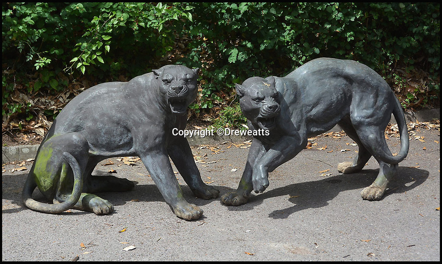 BNPS.co.uk (01202 558833)<br /> Pic: Dreweatts/BNPS<br /> <br /> A pair of panthers estimated at &pound;2,000.<br /> <br /> A remarkable collection of giant bronze animals has emerged for auction and is tipped to sell for &pound;40,000.<br /> <br /> The menagerie of exotic animals includes a 7ft tall giraffe, a 9ft long elephant and a 1,800lb stag.<br /> <br /> Also included in the collection are a lion, a cheetah, a panther, a rhinoceros, a hippopotamus, a crocodile, a deer, a wild boar, a horse and various bronze birds.<br /> <br /> They were consigned by a vendor in Berkshire who collected the bronze animals with her late husband over the course of 20 years.
