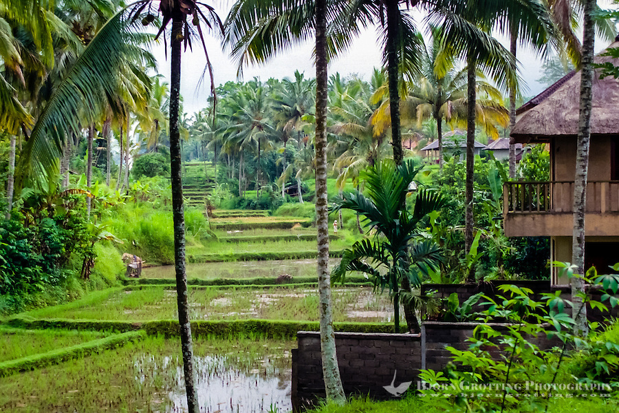 Bali, Gianyar, Ubud. The area surrounding Ubud is lovely and peaceful.
