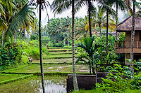 Bali, Gianyar, Ubud. The area surrounding Ubud is lovely and peaceful.