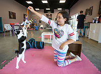 NWA Democrat-Gazette/BEN GOFF @NWABENGOFF<br /> Jenna Mondragon, 9, of Rogers plays with cats Saturday, Oct. 5, 2019, at Purr Catfe in Fayetteville. The non-profit is open for 'Purr Therapy' visits and all the cats are available for adoption.