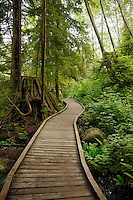 Wooden walkway, Lynn Canyon park, North Vancouver, Canada